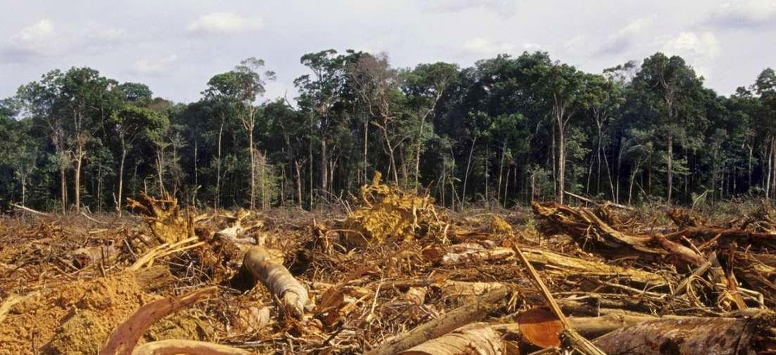 Teoria economica del medio ambiente