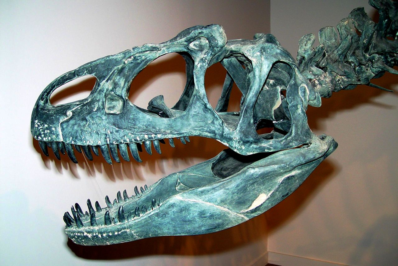 SCP-250 - Most of an Allosaurus