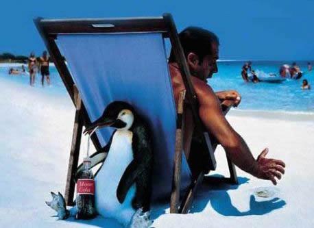 Funny Penguin Joke