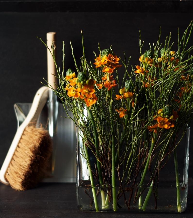 Blog + Fotografie by it's me! - Wohnen - orangefarbener Milchstern und ein Kehrset