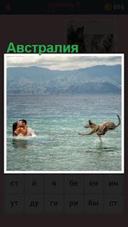 по воде к людям бежит кенгуру в Австралии