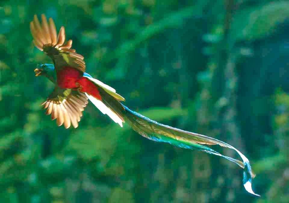 Quetzal Mayan Symbol Ancient Cosmic Knowled...