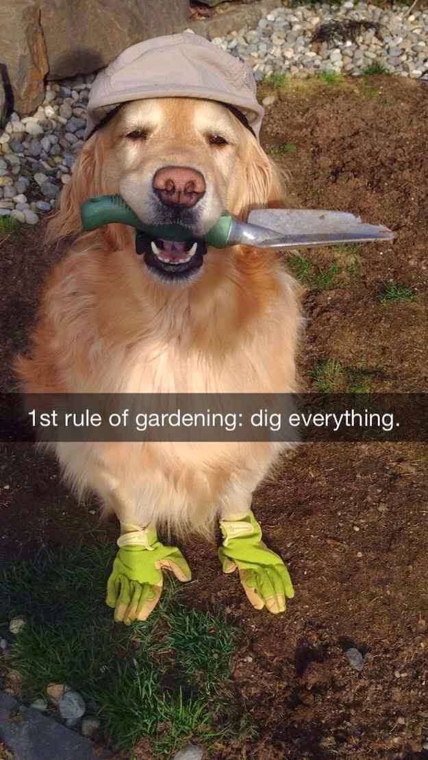 Funny First of gardening: Dig Everything - Dog  Joke Picture