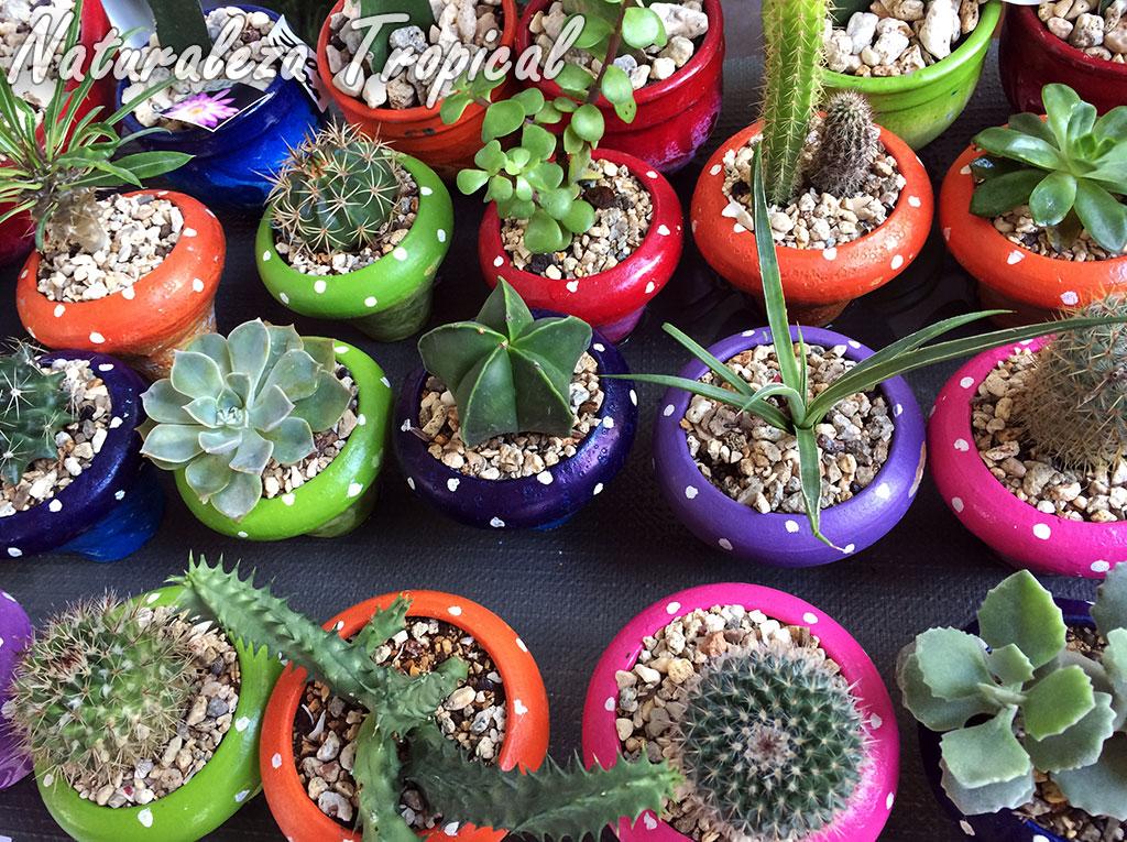 Cactus y dem s suculentas caracteristicas cactus y suculentas for Curso cactus y suculentas