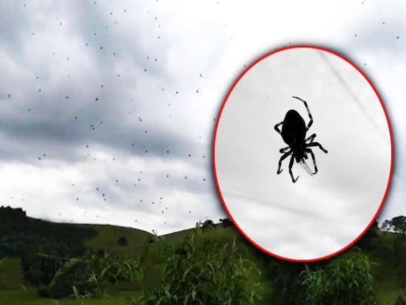 Brazil diserang labah-labah
