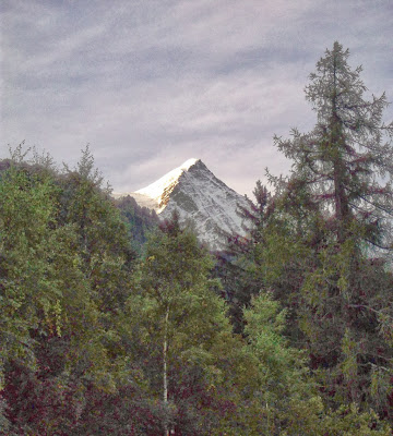 View of the peak of the Mont Blanc through a pine forest