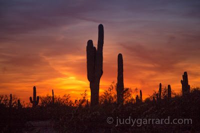 Cacti and sunset at Desert Botanical Gardens