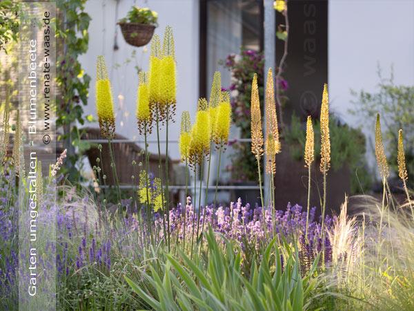 Blumenbeete mediterran - vor der Terrasse nach der Garten - Umgestaltung