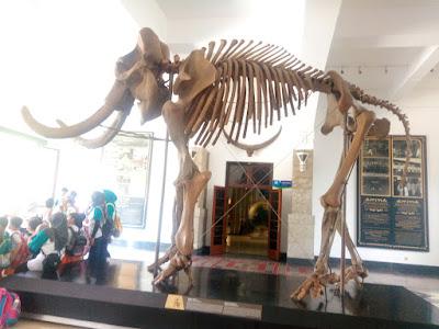 fosil dinosaurus di museum geologi bandung