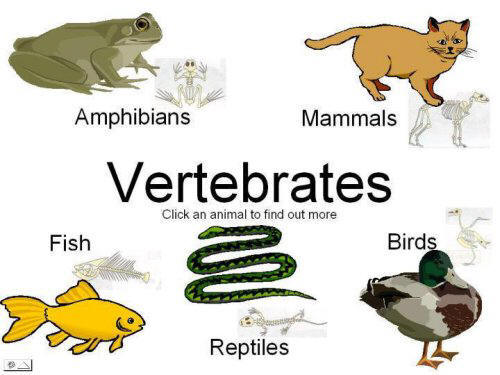 Lets go Vertebrate animals – Vertebrate Worksheet