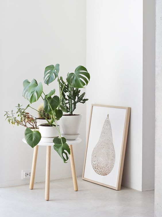 Deco-friendly | Plantas