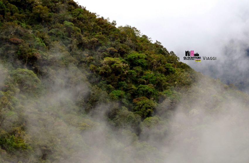 Stazione biologica Wayqecha, il centro di ricerca sulle Ande - Viaggi