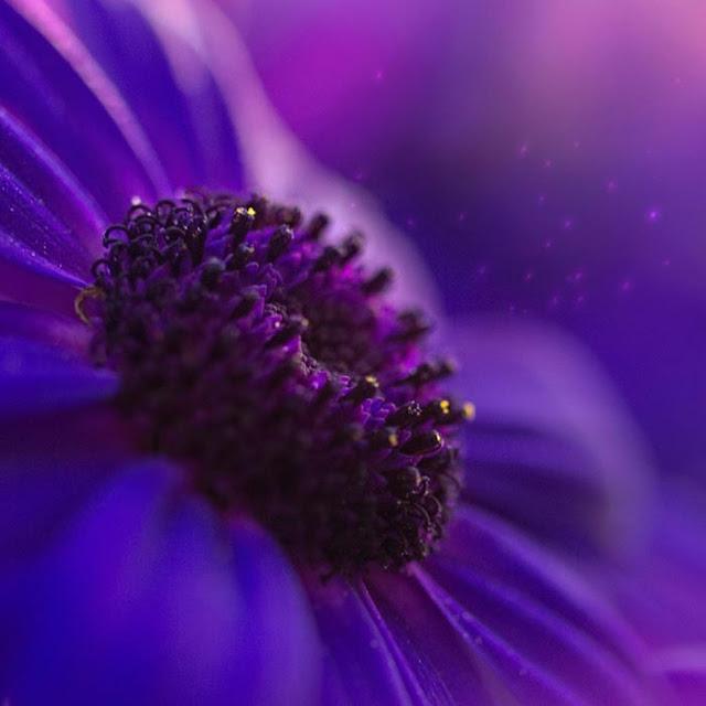 Purple Flower Wallpaper Engine