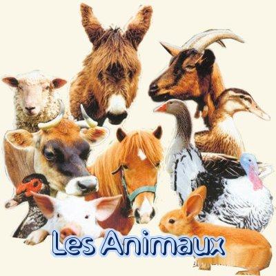 Lista de 76 animales en franc s con ejemplos ayuda franc s for Lista de comida en frances