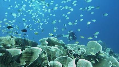 foto diving bawah laut wakatobi