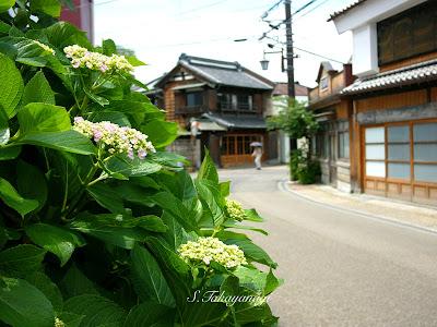 日本の風景 栃木市の風景 旧例幣使街道 紫陽花 散歩