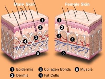 Tecido masculino vs feminino