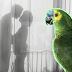 Burung Kakak Tua Dedah Suami Berlaku Curang Dengan Pembantu Rumah