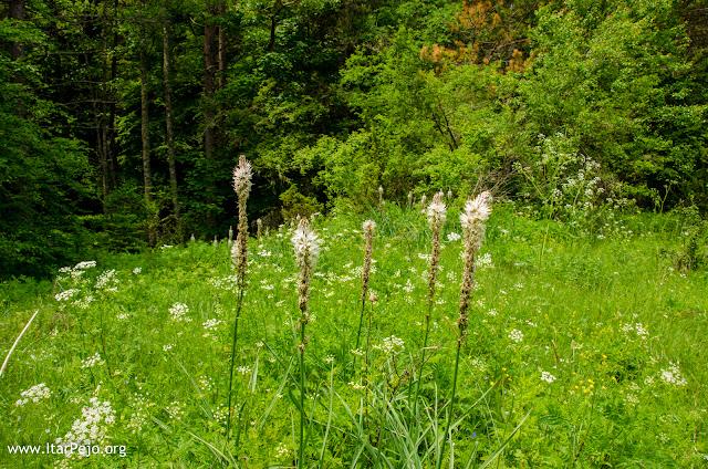 Flora - Mariovo region - Macedonia