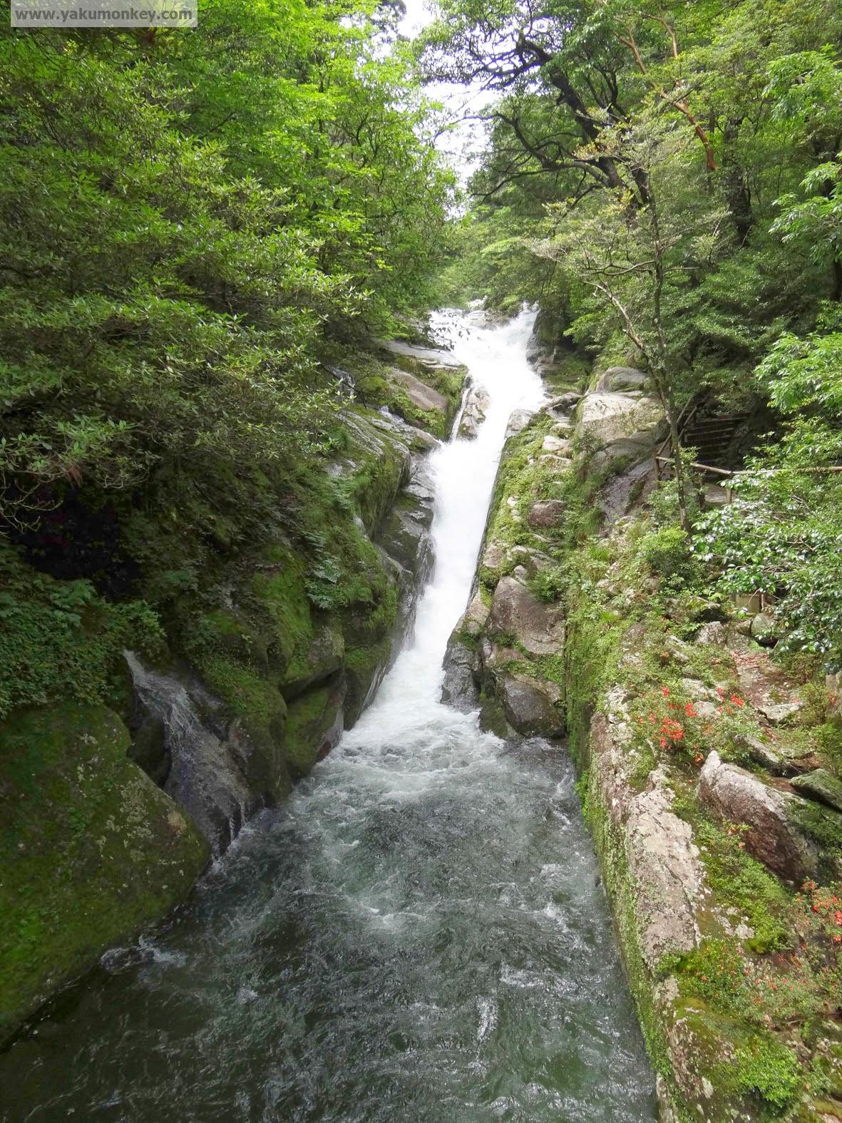 Hiryu Otoshi Waterfall, Yakushima