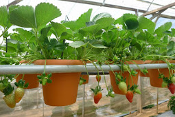 Best Hydroponic Growing System