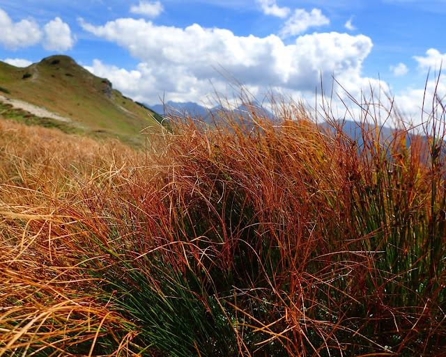 Już w połowie sierpnia w Tatrach są pierwsze oznaki jesieni