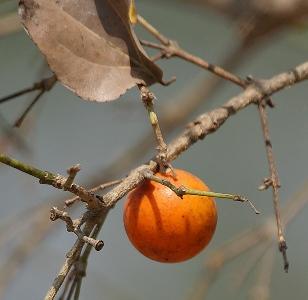 6. Poison Nut