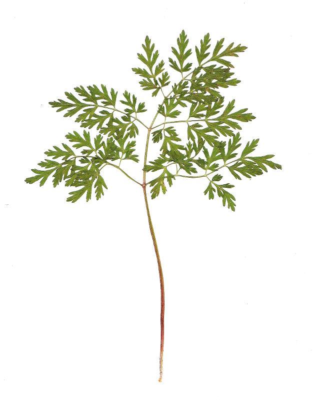 blogi, sisustusblogi, lifestyle, taide,arkitunnelmia, heinät, kesä, luonto, sisustus, sisustaminen, juureva, bambu, kori, rottinki, luonnollinen sisustustyyli, luonnollinen, parveke, viherkasvit, puutarha, piha