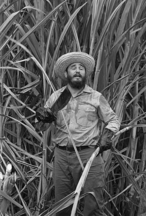 8baf6a89a282b0 Fidel Castro Harvesting Sugar Cane