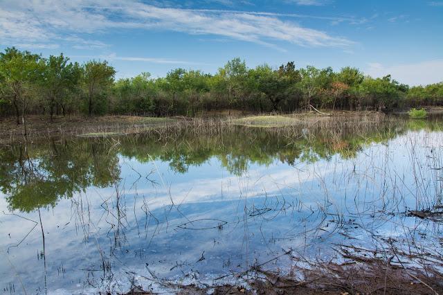 Seasonal Pond, LLELA