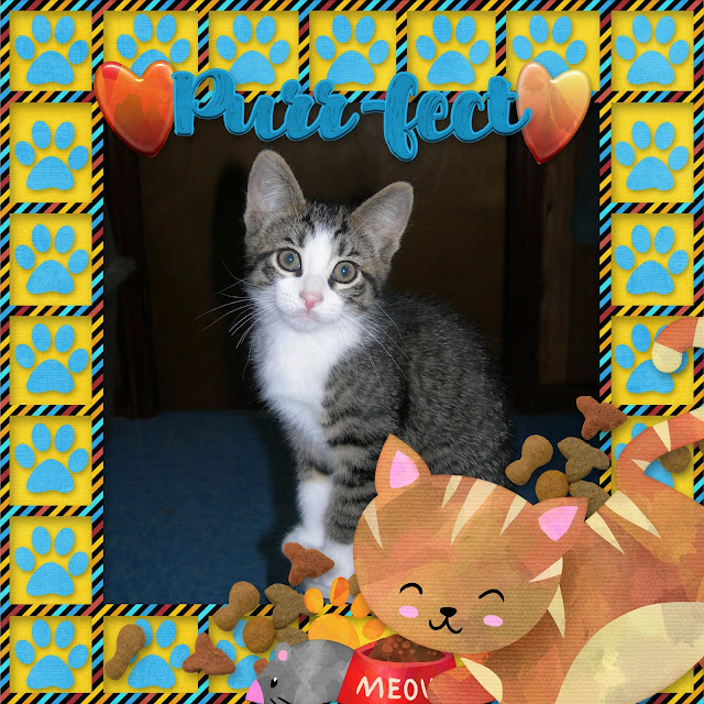 furfam cats