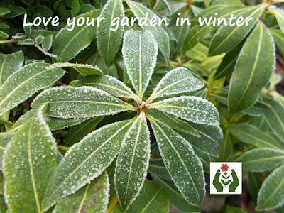Love your garden in winter Evergreens Green Fingered Blog