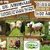 Feira de animais em Piancó: Participem!!!