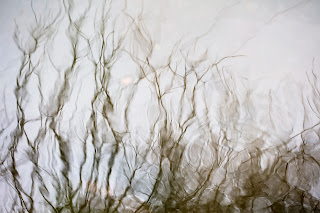 Reflections of bare tree branches in a pond in Texas
