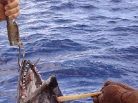Pemancing Temukan Mitos Tunicorn