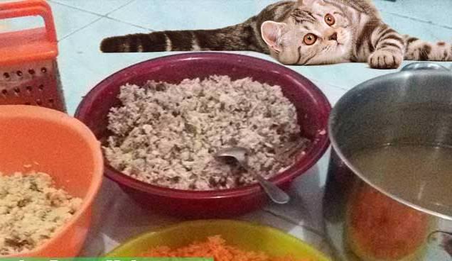 Makanan Kucing Anggora Yang Murah Alami Dan Bisa Dibuat Sendiri