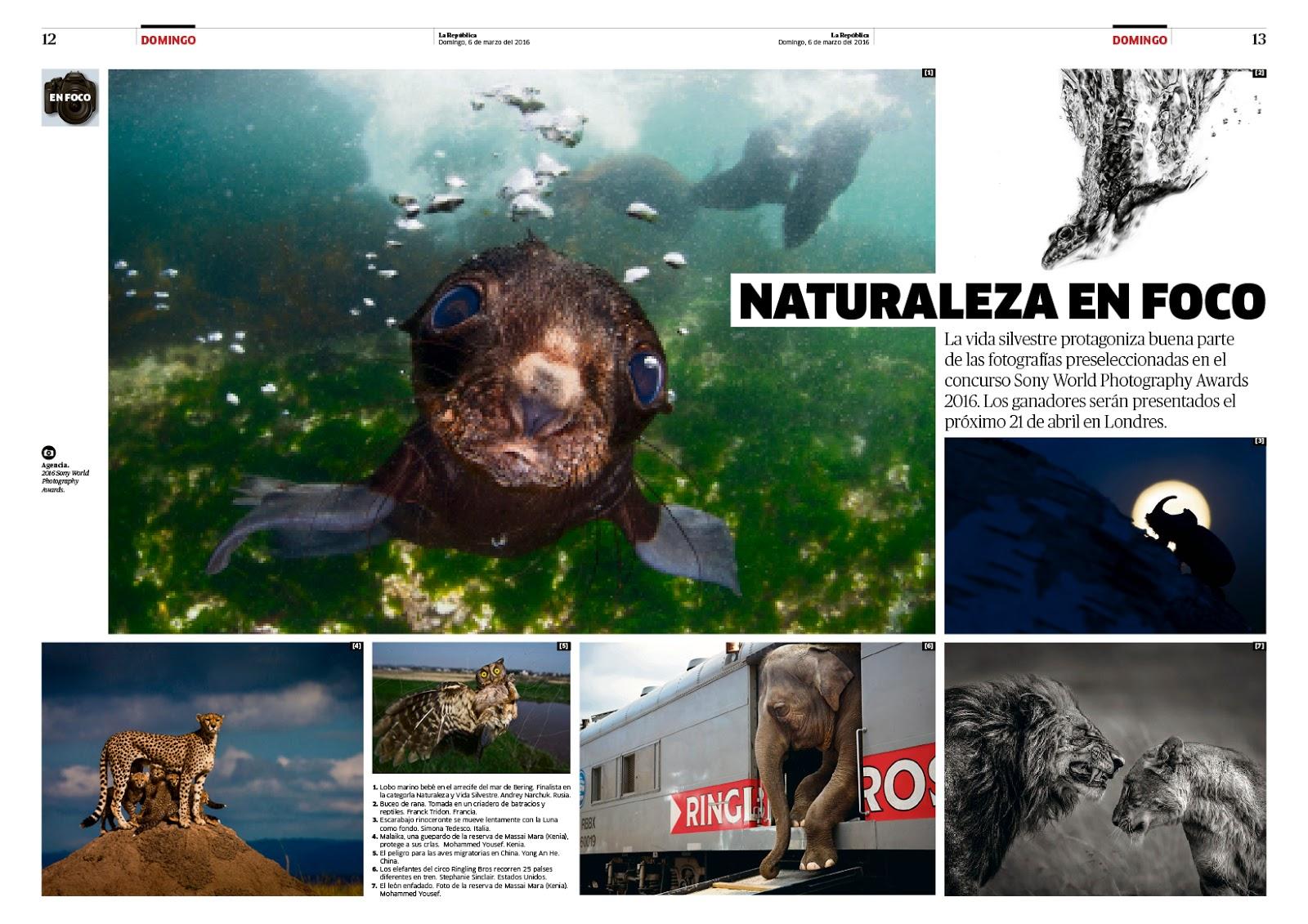 Diseño editorial Revista Domingo Febrero y Marzo   Columnas y Módulos