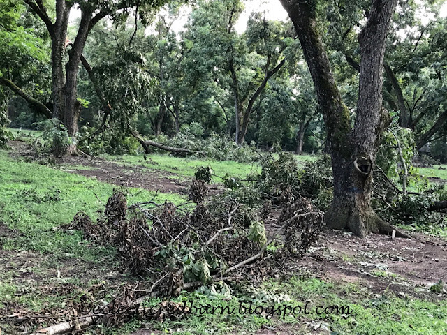 Eclectic Red Barn: Toppled pecan trees