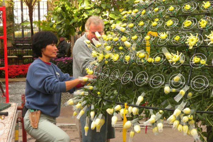Colocando las flores en los bastidores