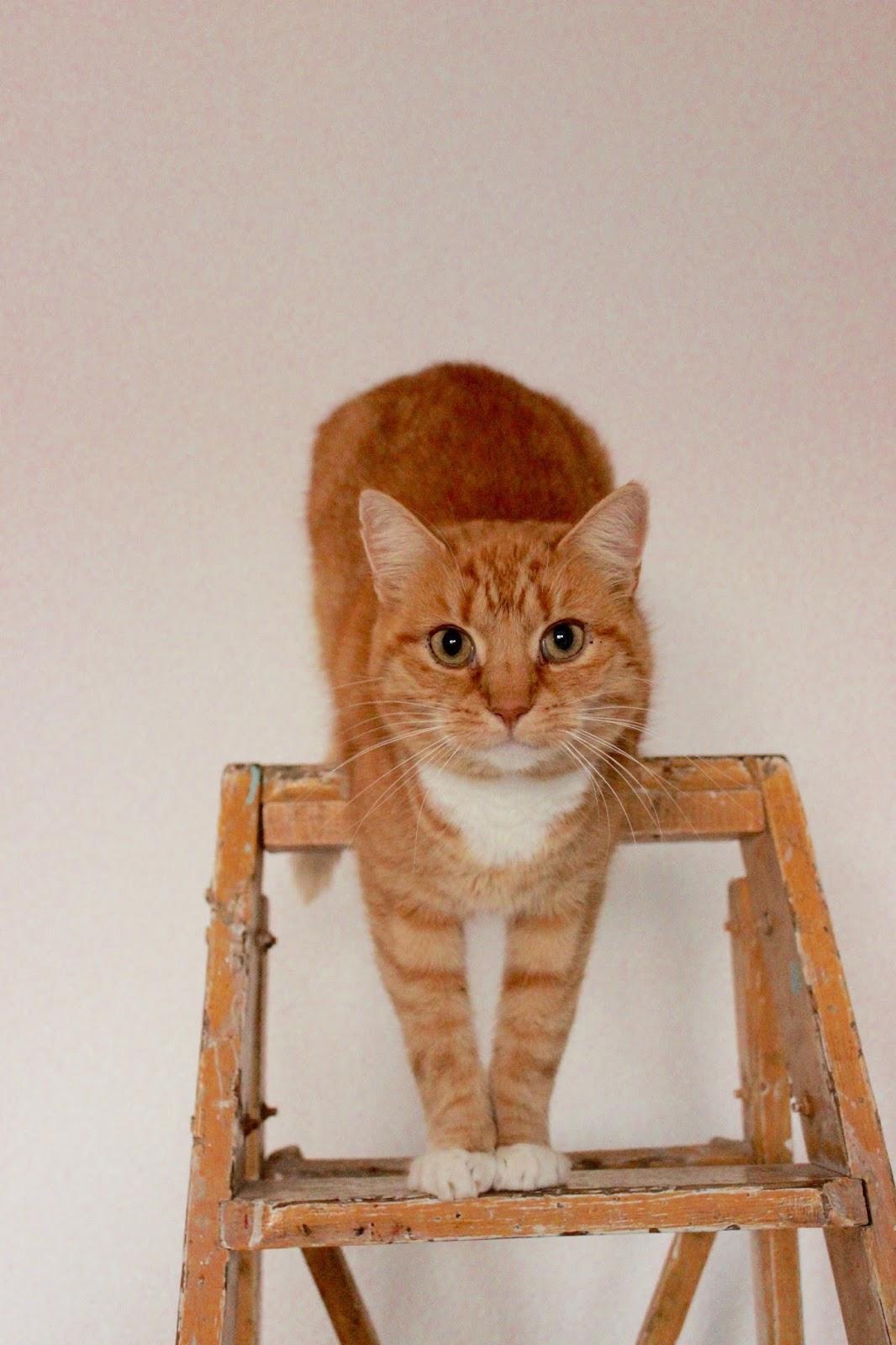 konfetti katze gott schuf die katze damit der mensch einen tiger zum streicheln hat. Black Bedroom Furniture Sets. Home Design Ideas