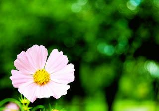 احلى صور ورد , صورة ورد , صور وردة جميع الالوان