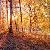 ZPP Meio Ambiente: Por que as folhas das árvores caem no outono?