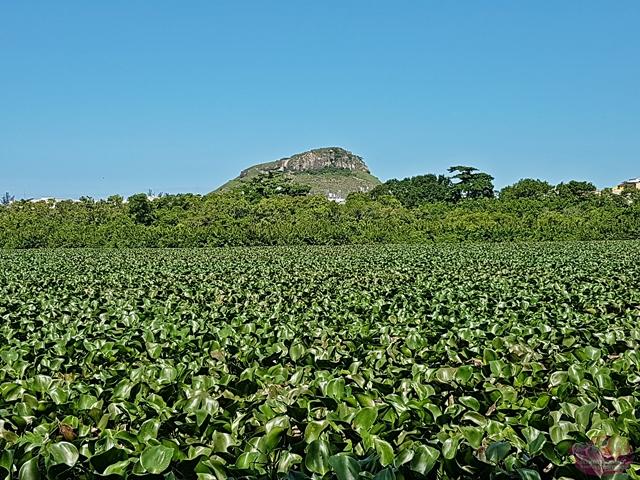 Por que visitar o Parque Chico Mendes no Rio de Janeiro?