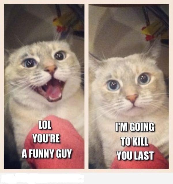 Funny Cat Memes: 30 Funny Animal Captions - Part 7 (30 Pics)