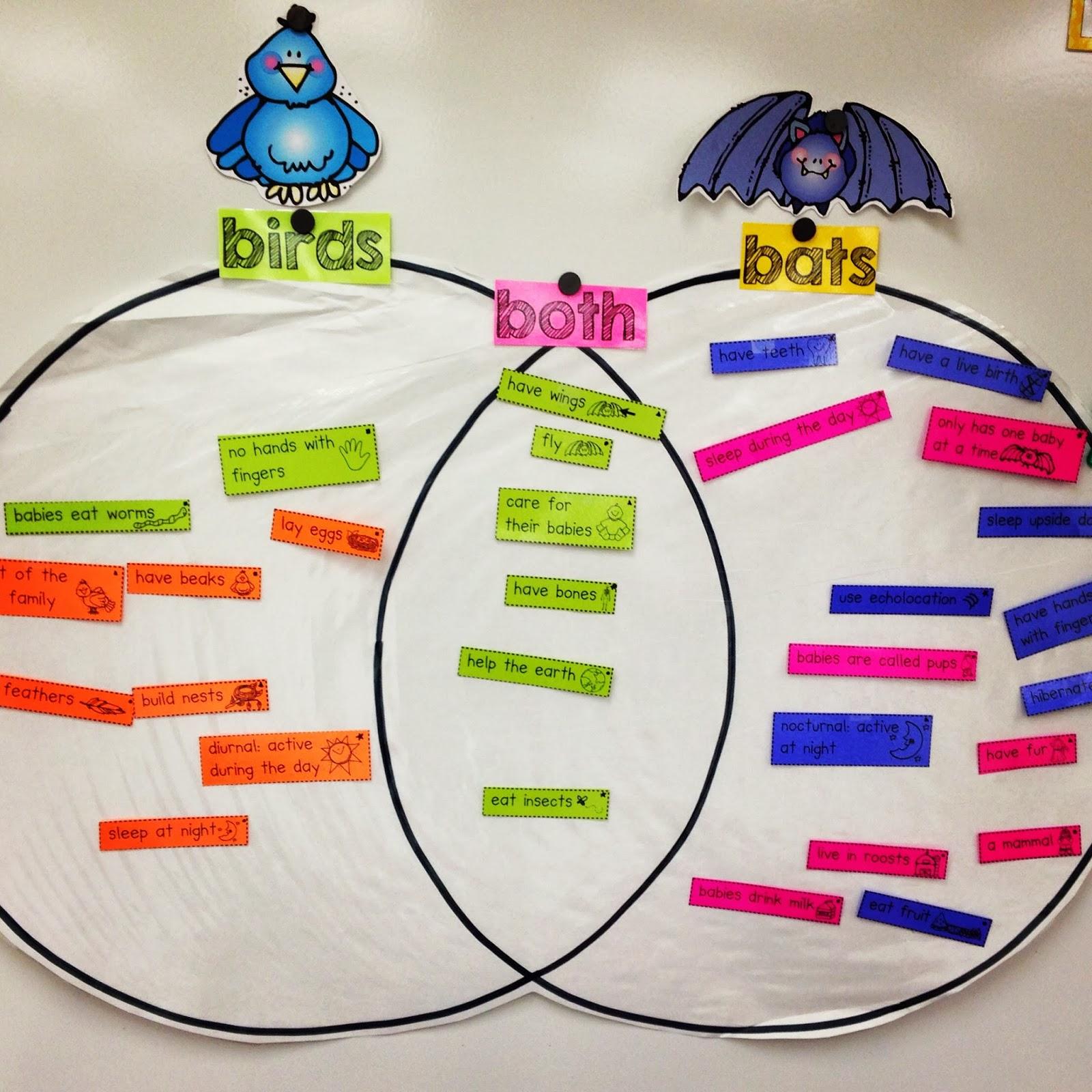 stellaluna venn diagram activity motorcycle electrical wiring kindergarten smiles all about bats unit wrap up