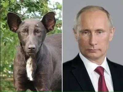 Vladimir Putin con cachorro