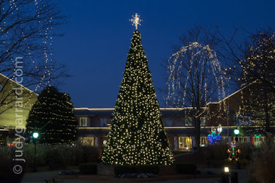 City  of Smyrna Christmas Tree