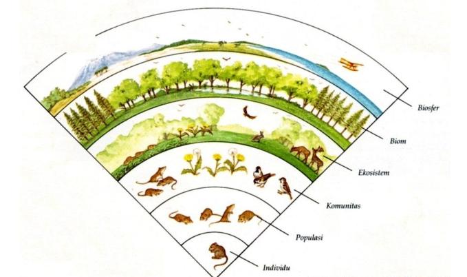Ekosistem, pengertian ekosistem, pengertian ekosistem dan cotohnya, satuan-satuan ekosistem, ekositem terdiri dari, pengertian biosfer, biosfer, hidrosfer, litosfer, komponen ekosistem, komponen abiotik, komponen biotik, pengertian produsen pada ekosistem, konsumen tingkat 1 2 3, organisme saprofit, organisme outotrof, organisme heterotof.