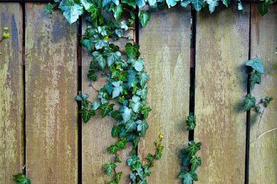 pixabay.com/en/fence-wooden-fence-plank-3156734/