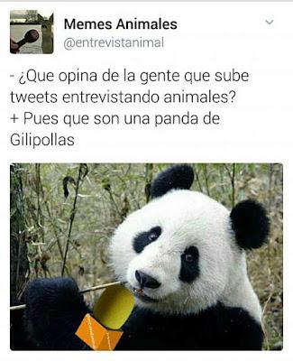 panda de gilipollas
